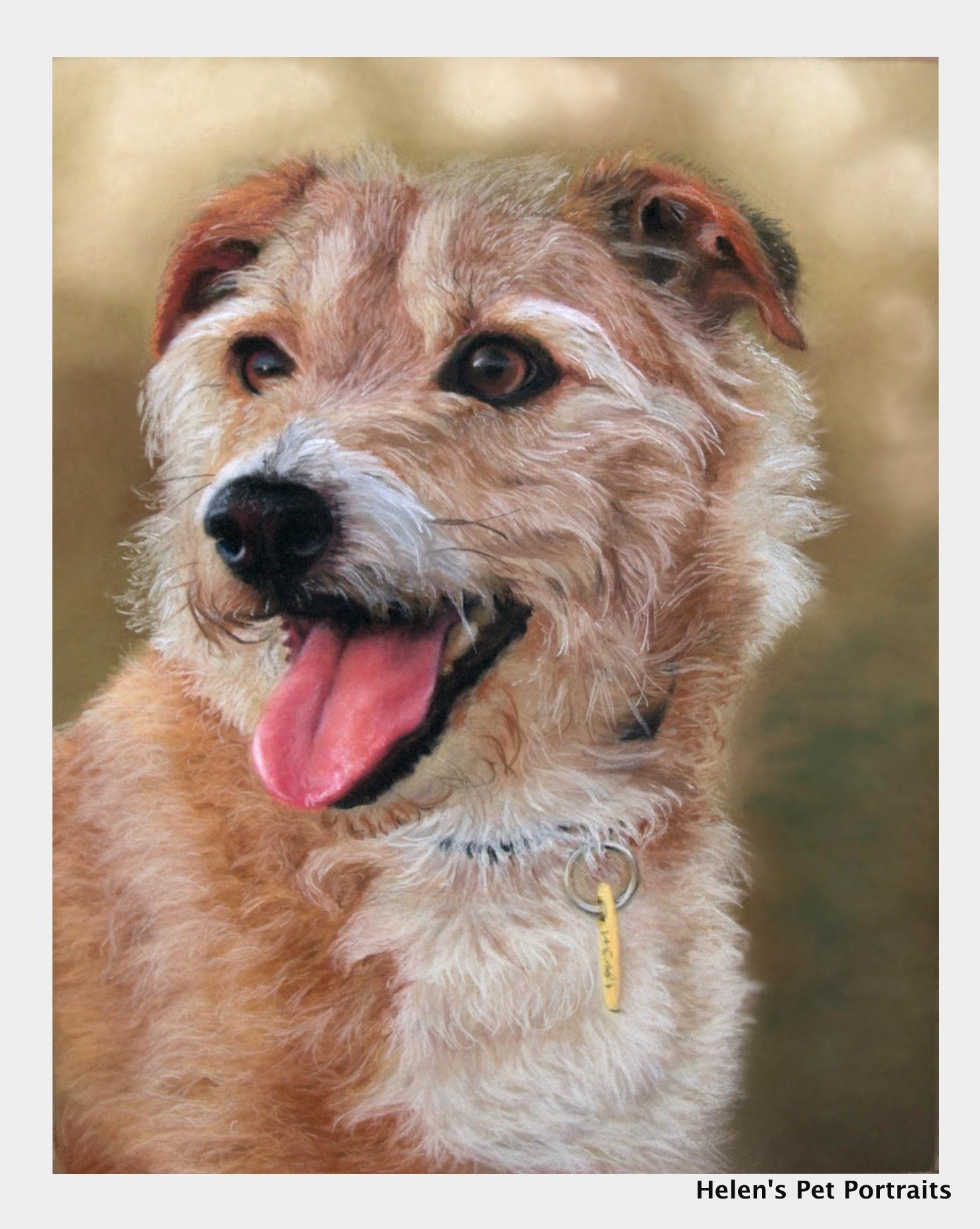 Dog artist covering Exeter, Barnstaple, Bideford