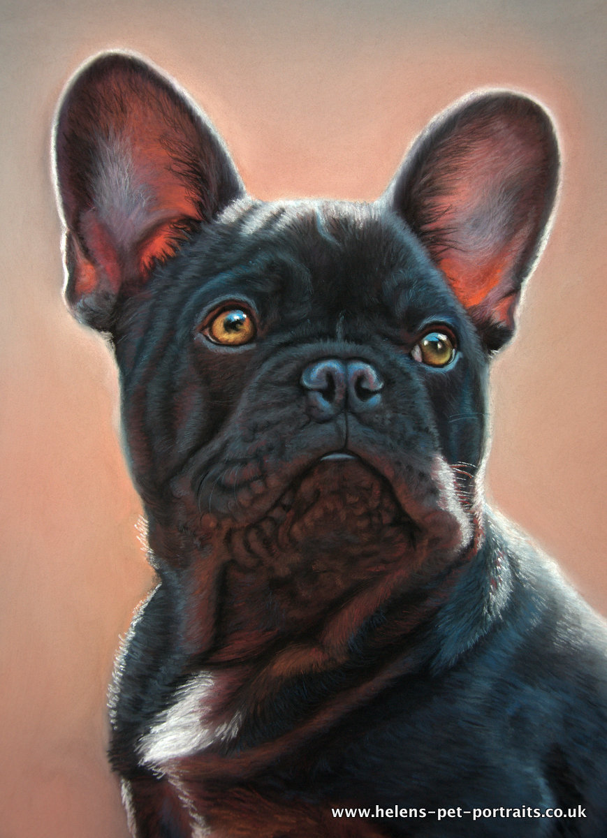 colourful portrayal of a black french bulldog by UK Pet Artist