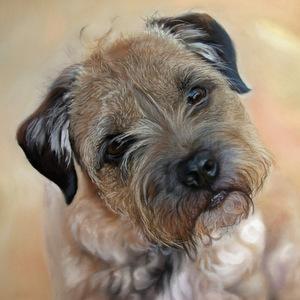 pet portrait artist UK pastel painting of border terrier dog