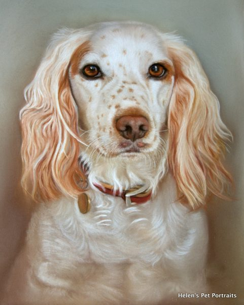 pet artist hand drawn cocker spaniel dog painting