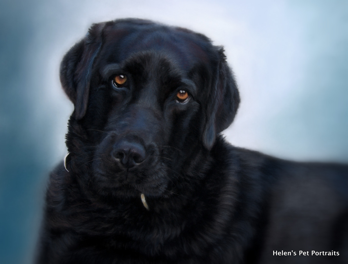 Pastel painting of a black labrador dog