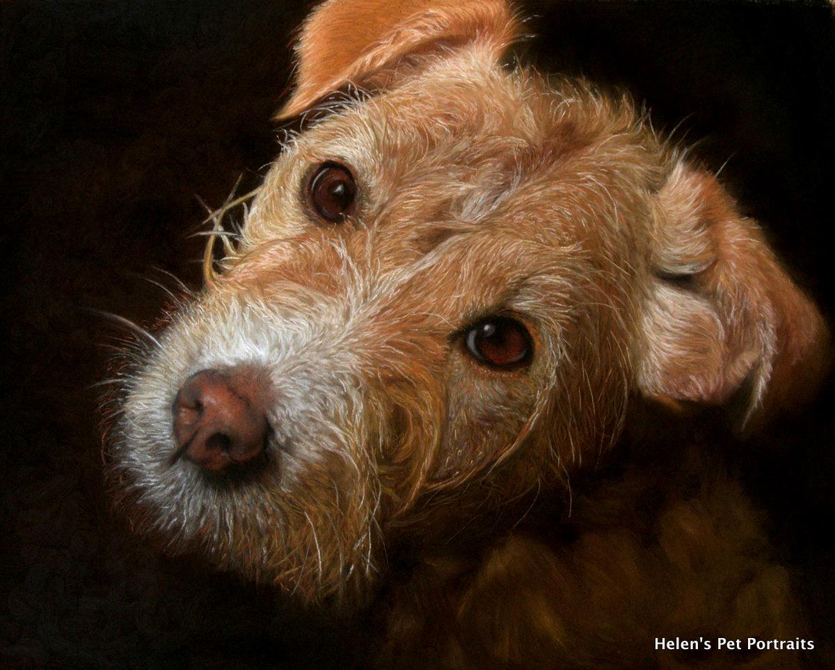 orange dog with black background up close