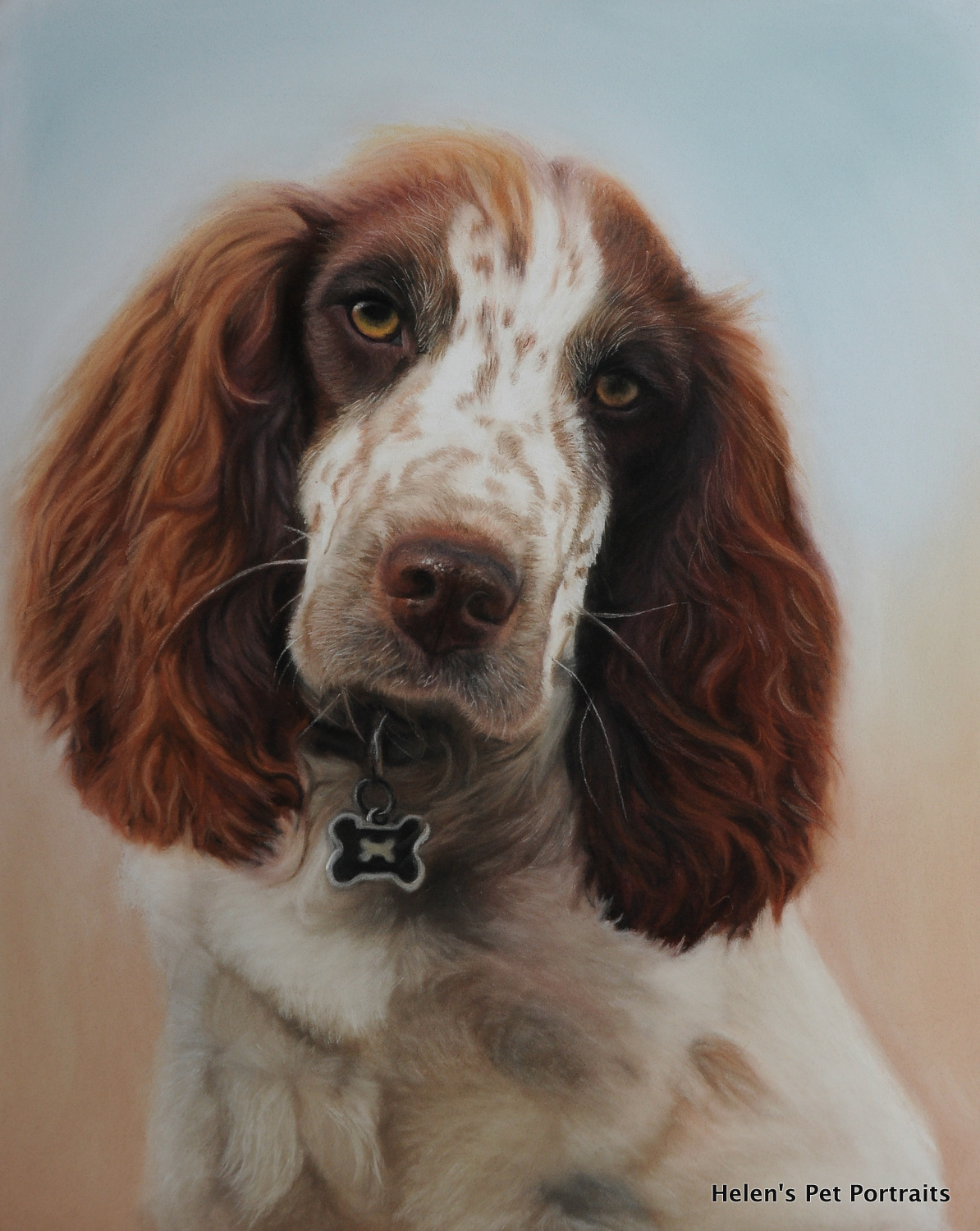 pastel pet portrait painting of a sprocker dog brown and white with soft background