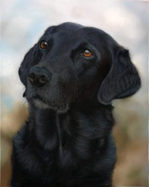 Black dog against a muted background
