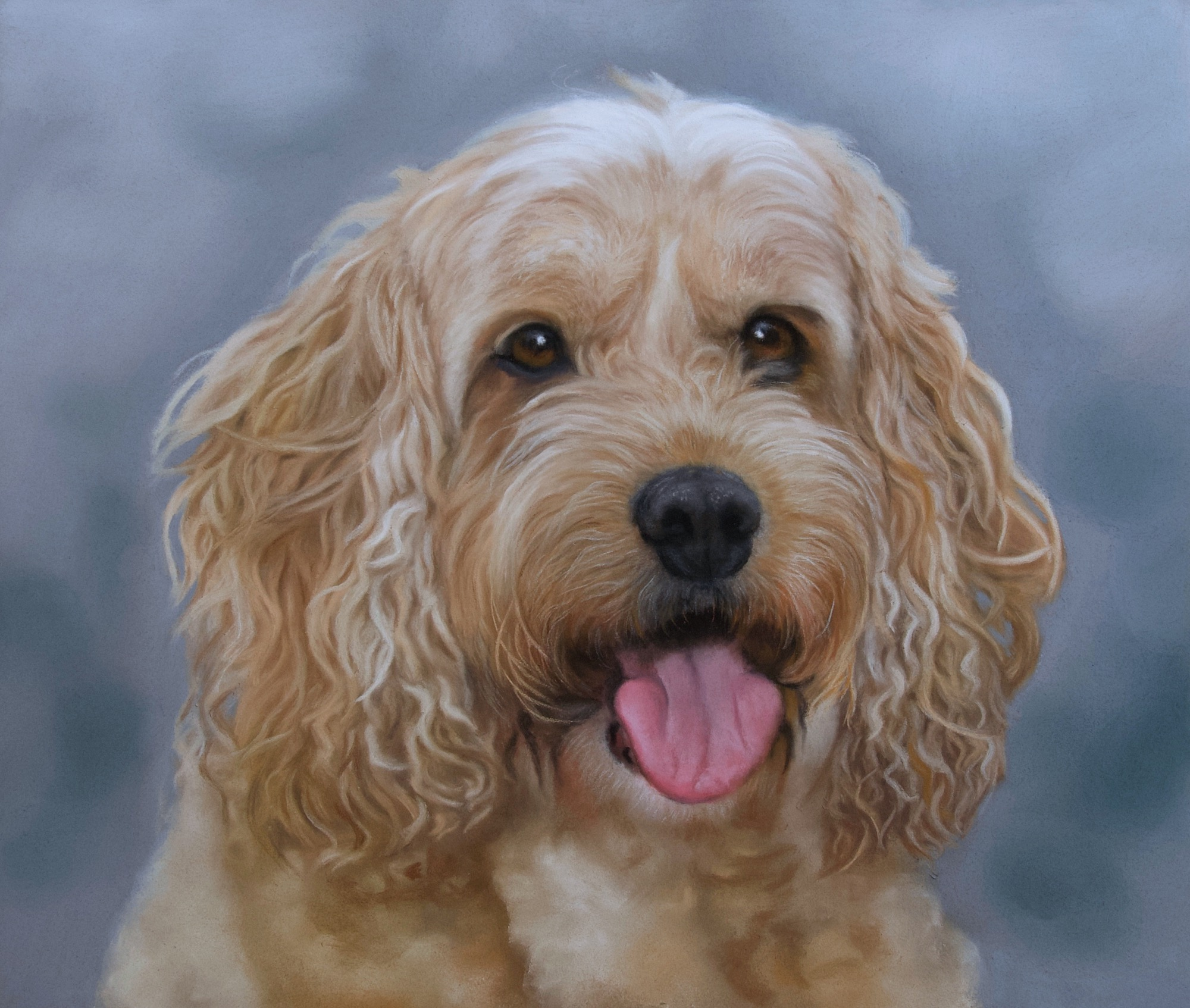 apricot coloured cockapoo dog with blue grey background