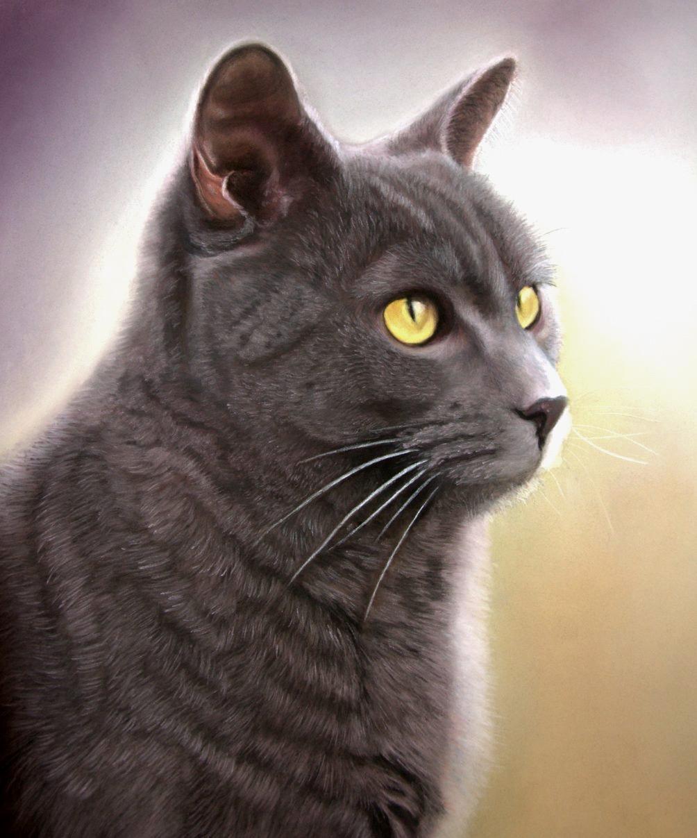 british shorthair blue cat pastel painting