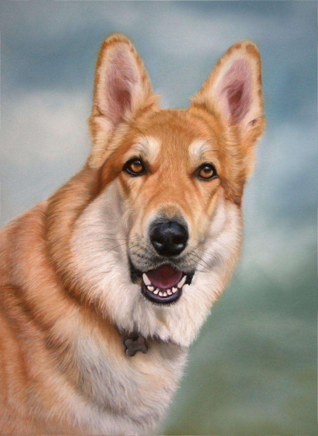 german shepherd dog looking happy