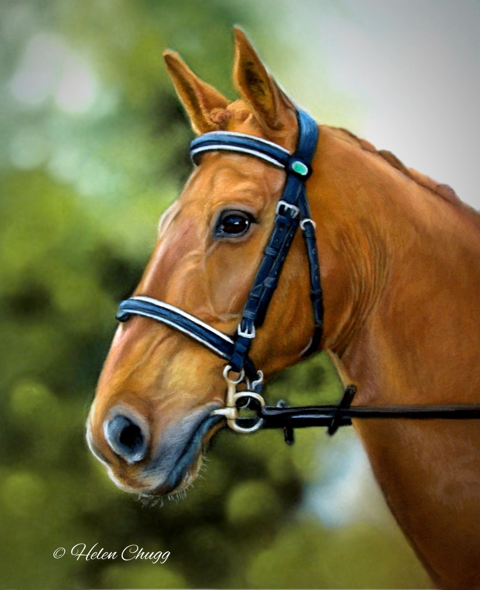 chestnut coloured horse with bridle against a tree background