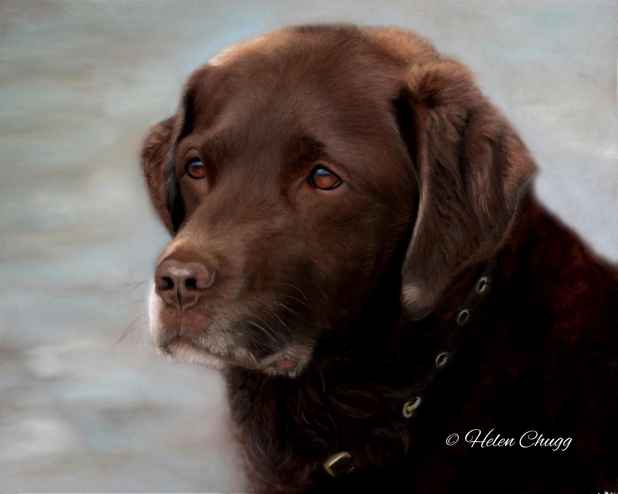 brown dog pastel labrador paintings