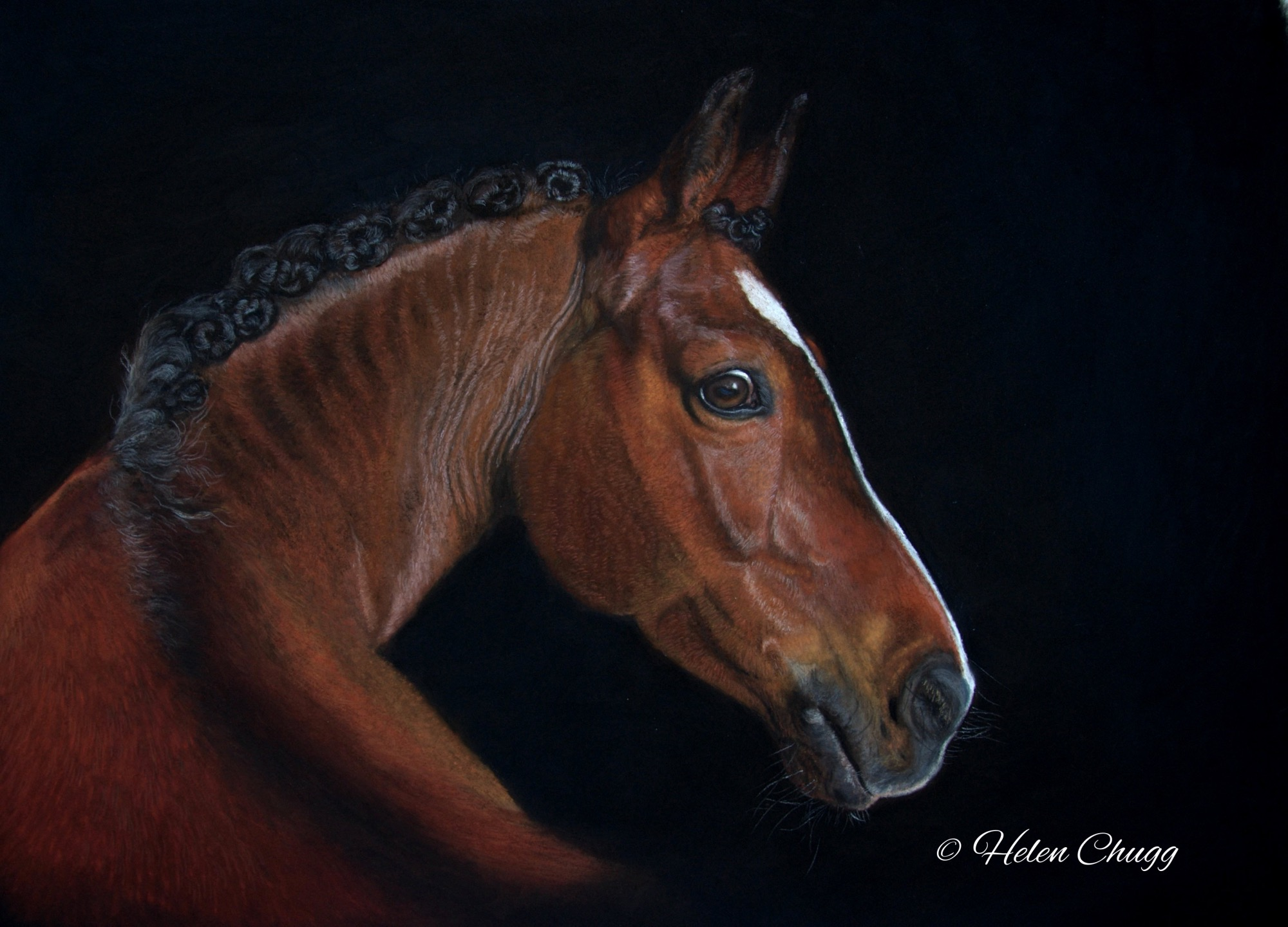 rich chestnut brown horse looking back