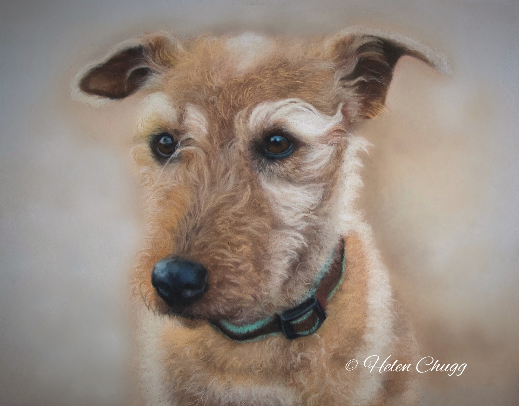 wire haired dog in beige colours