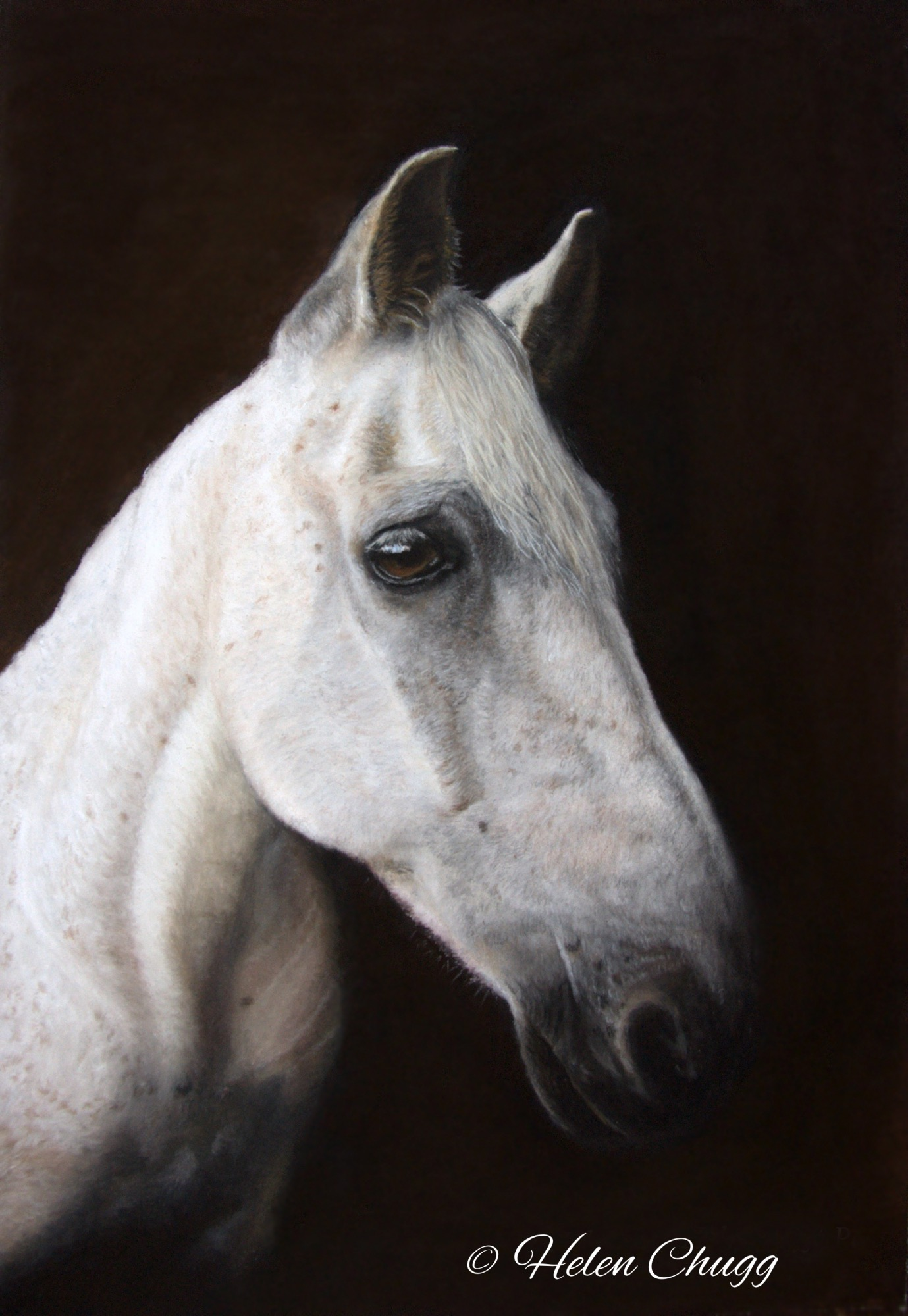 grey horse against a black background