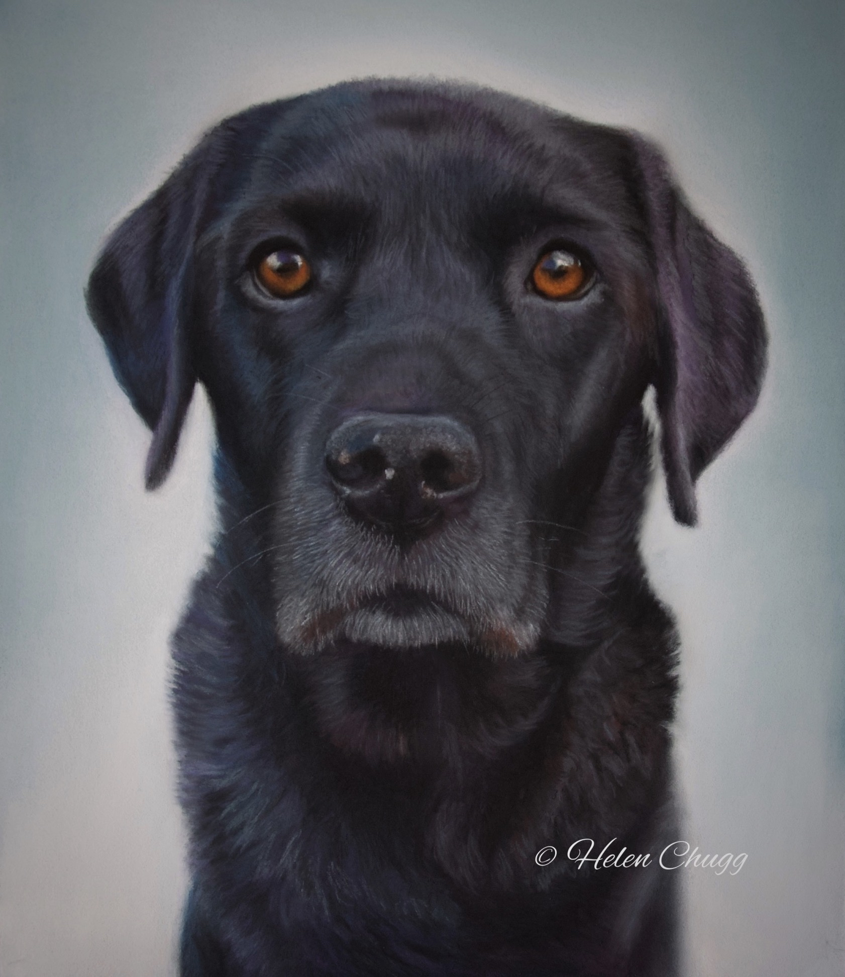 pastel painting of a realistic looking black dog by Pet Portrait Artist