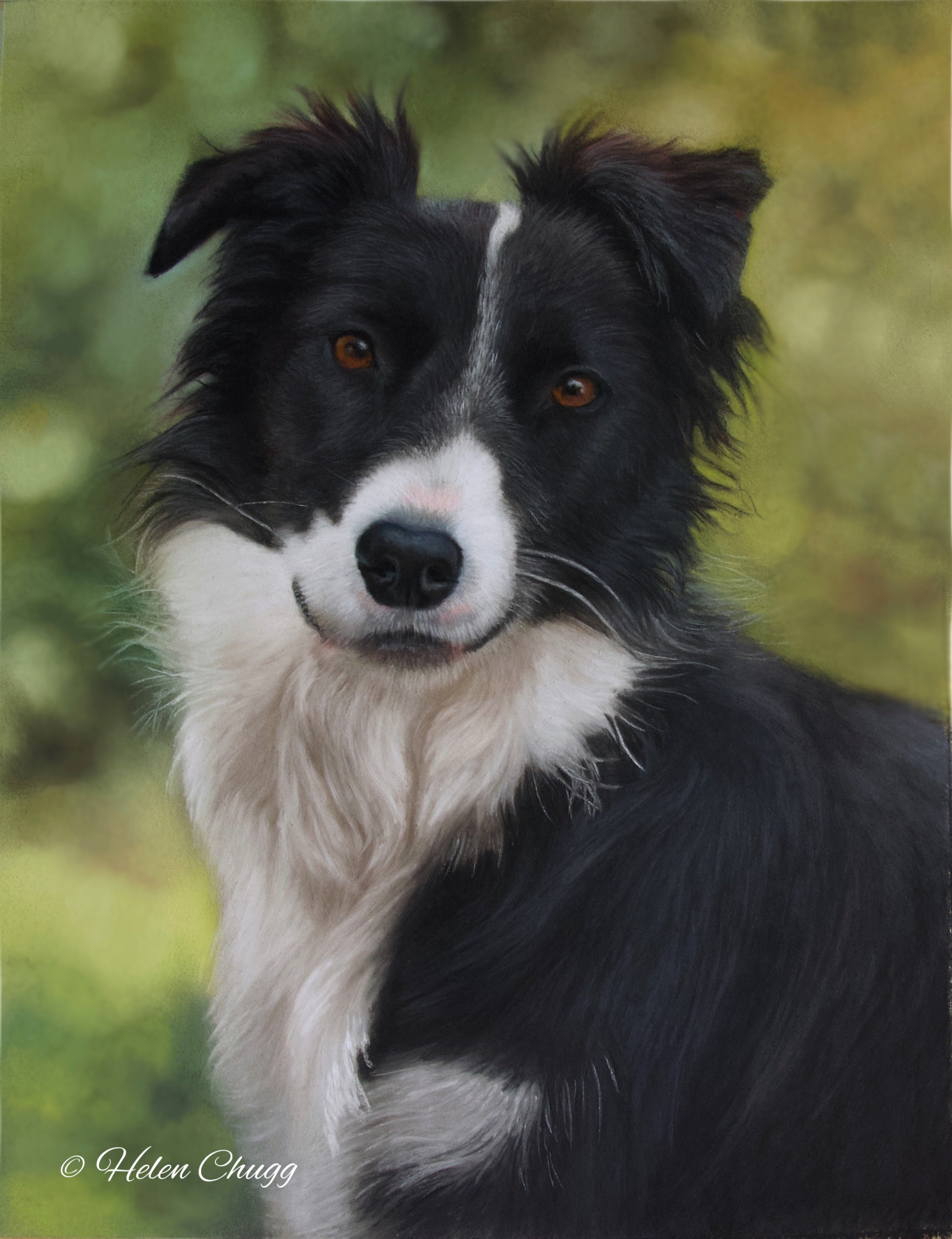 black and white dog against a green background